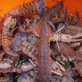 Tôm tít hải sản tươi ng từ biển giá sỉ