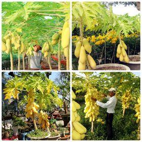 Bán buôn bán sỉ 700 sp hạt giống hoa hạt giống rau củ qủa các loại giá sỉ