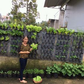 Túi trồng rau sạch giá sỉ