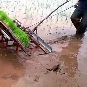 máy cấy lúa không động cơ giá sỉ