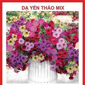 Hạt giống hoa Dạ Yến Thảo mix nhiều màu - 100 hạt giá sỉ