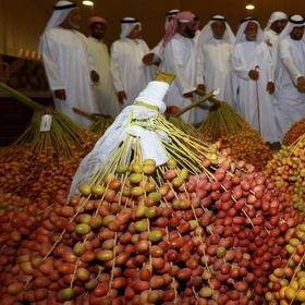 Phân phối sỉ chà là ngon nhất thế giới - Chà là Sudan giá sỉ