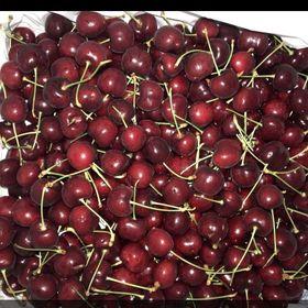 Cherry Canada size 9 giá sỉ
