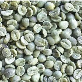 Cà phê hạt nhân xanh Arabica cỡ hạt sàng 18 giá sỉ
