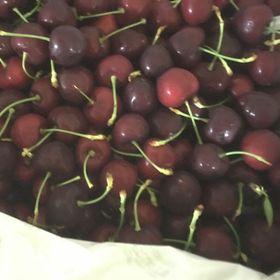 cherry úc giá sỉ