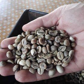 Cà phê nhân cà phê nguyên liệu cà phê nhân robusta giá sỉ