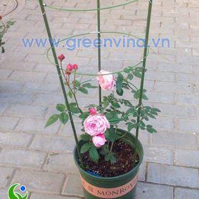 Giá đỡ hoa hồng 15m giá sỉ