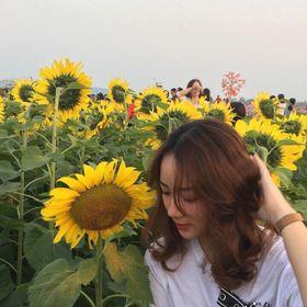Hạt Giống Hướng dương Thailand giá sỉ