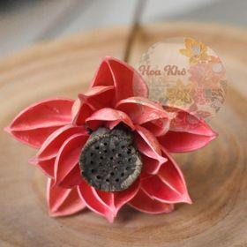 Hoa sen có đài hồng giá sỉ