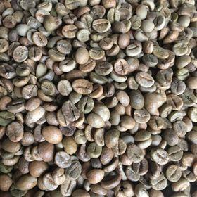 Cà phê nhân robusta giá sỉ