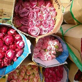 hoa tuơi Đà Lạt giá sỉ