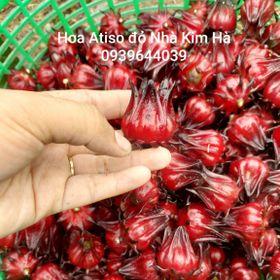 Hạt giống cây atiso đỏ giá sỉ