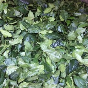 sỉ bột trà xanh, bột trà xanh nguyên chất, matcha, bột trà xanh thái nguyên, greentea giá sỉ