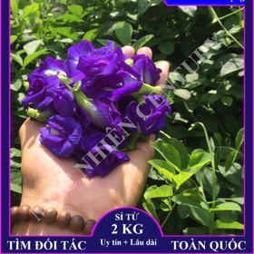 Hoa đậu biếc khô giá sỉ