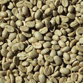 Hạt cafe nhân sống giá sỉ