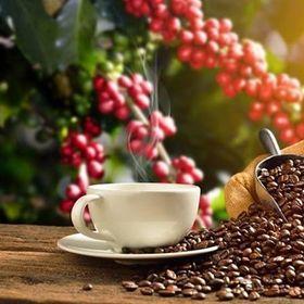 Cà phê hạt nguyên chất Napoli coffee giá sỉ