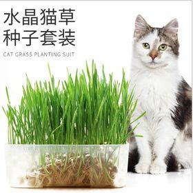 bộ trồng hạt giống cỏ mèo giá sỉ