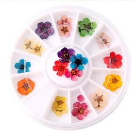 Khay 12 loai Hoa khô trang trí móng 3D giá sỉ