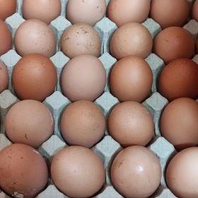 Trứng gà tươi size lớn (Giao Q10) giá sỉ