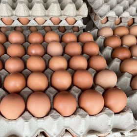 Trứng gà công nghiệp giá sỉ