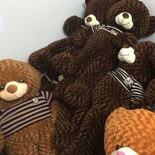 Gấu nhồi bông teddy giá sỉ
