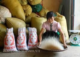 Gạo nếp tú lệ chuẩn 100 giá sỉ