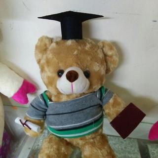 Gấu bông tốt nghiệp 60cm giá sỉ