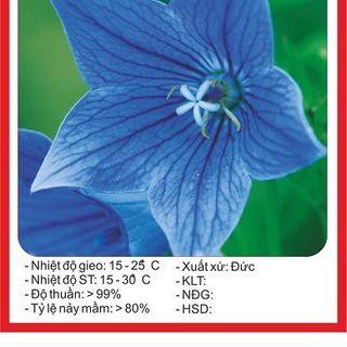 Hạt giống hoa Cát Cánh - 50 hạt giá sỉ