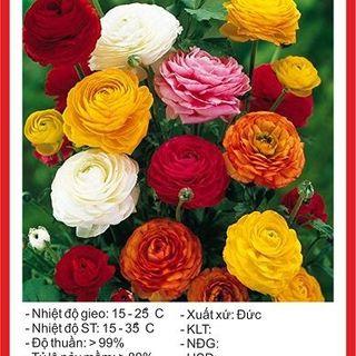 Hạt giống hoa Hồng Ribatu mix nhiều màu gói 5 hạt giá sỉ