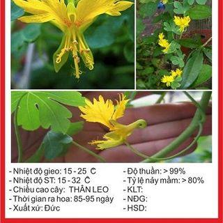 Hạt giống hoa Cánh Phượng - 4 hạt giá sỉ