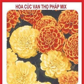 Hạt giống hoa Cúc Vạn Thọ Pháp mix nhiều màu - 50 hạt giá sỉ