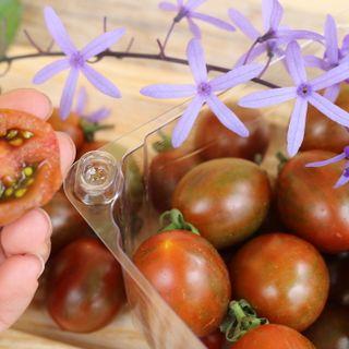 Cà chua chocolate - Thảo Đà Lạt giá sỉ