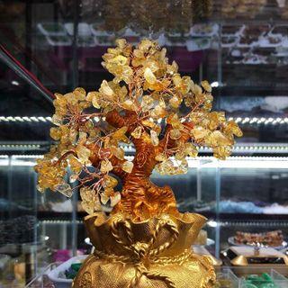Cây tài lộc túi tiền thạch anh vàng 22 cm - MSP 771 giá sỉ