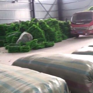 cỏ xanh giá sỉ