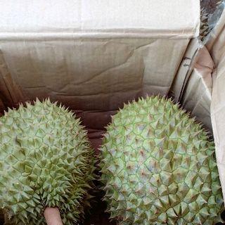 sầu riêng ri 6 chín rụng giá sỉ