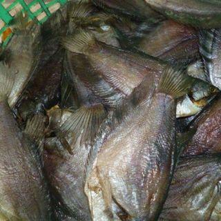 Khô cá bổi giá sỉ