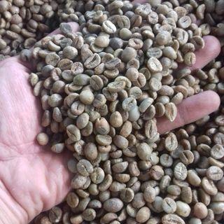 Cà phê nhân sống Robusta S18 - ĐakLak giá sỉ